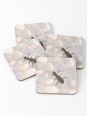 Cobblestone tiger beetle, Cicindela marginipennis Coasters