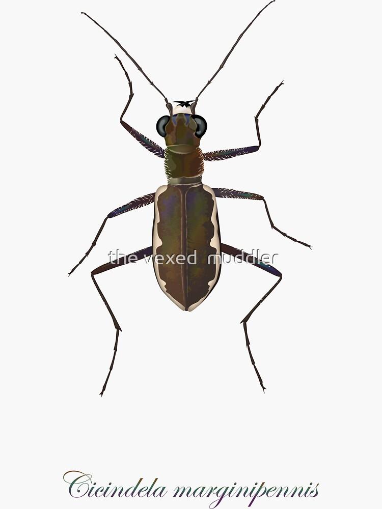 Cobblestone tiger beetle, Cicindela marginipennis by thevexedmuddler