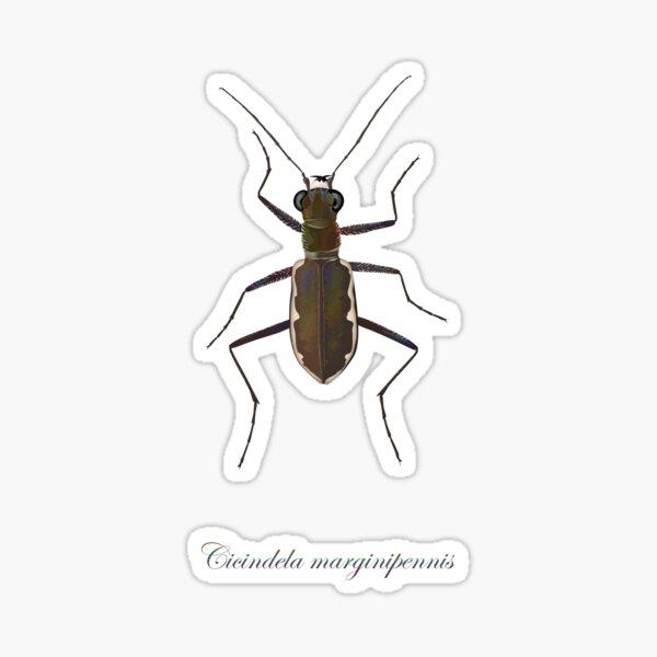 Cobblestone tiger beetle, Cicindela marginipennis Sticker