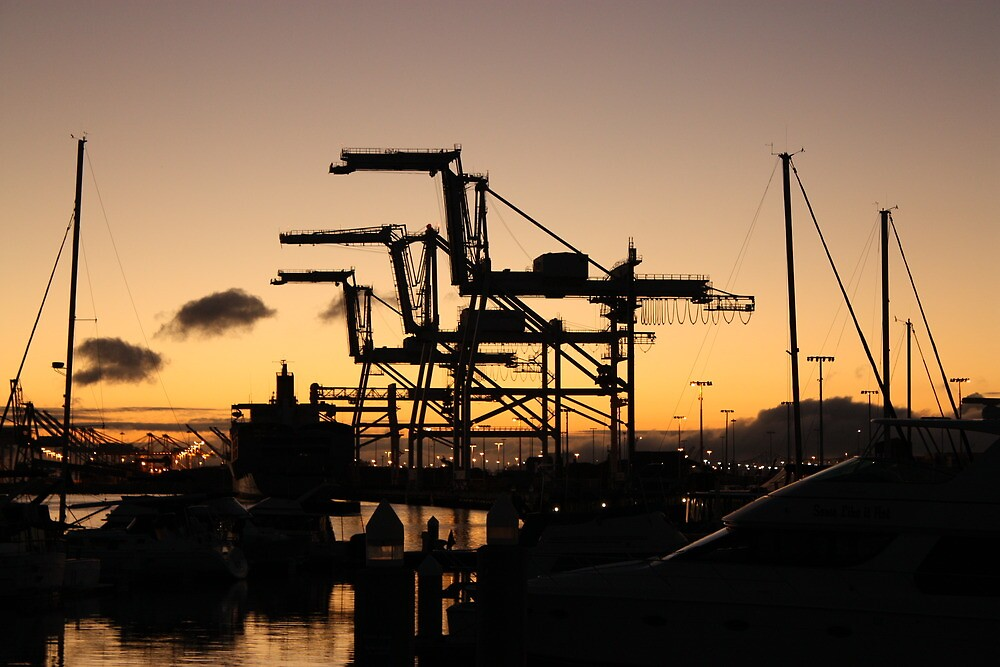 Oakland Docks - Horses by Sam Maule