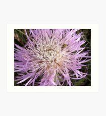 Ladybug Visits Purple Bloom Art Print