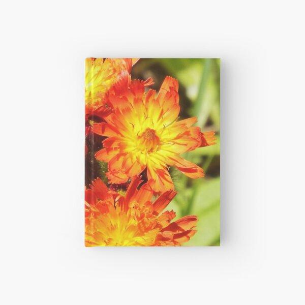 Hawkweed Hardcover Journal
