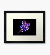 Fuchsia -- Heidi Ann III Framed Print