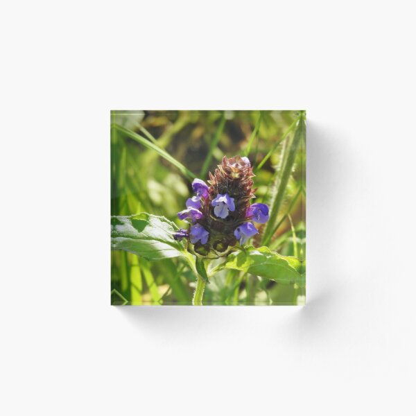 Self Heal Wildflower Acrylic Block