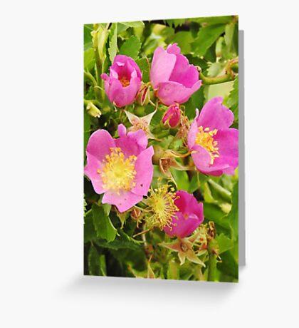Wild Roses Greeting Card