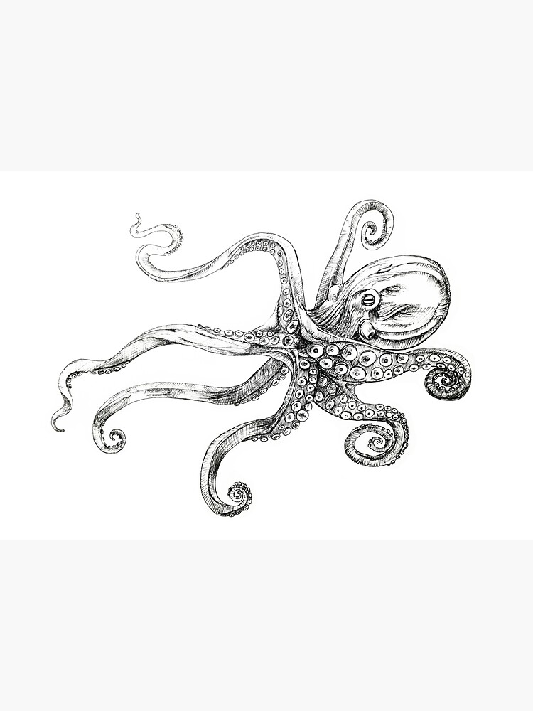 Magnificent Septupus Octopus Cephalopod by mainlyruby