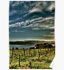 Rosevears Vineyard at Dawn - Tasmania, Australia Poster