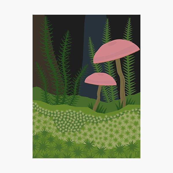 Mushrooms and Moss Photographic Print