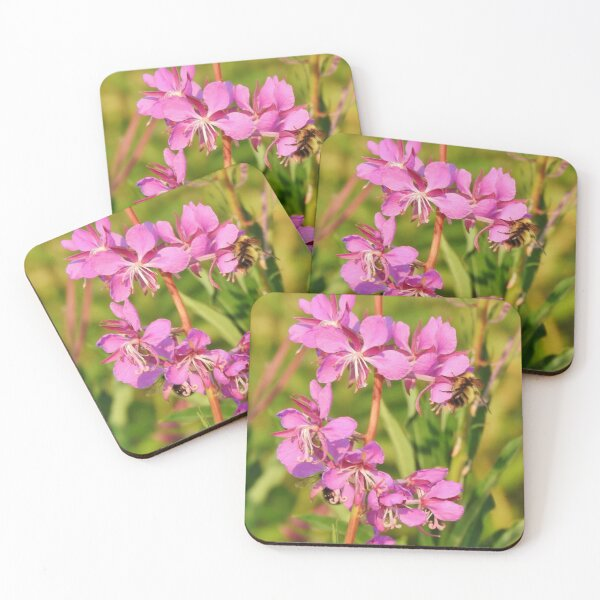Fireweed Wildflower Coasters (Set of 4)