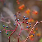 Red Stems by Lynn Wiles