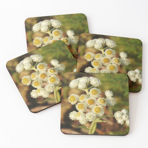 Pearly Everlasting Wildflowers Coasters (Set of 4)