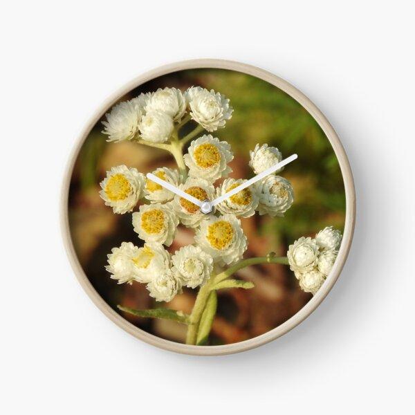 Pearly Everlasting Wildflowers Clock