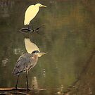 Great Blue Heron andThe Egret by DottieDees