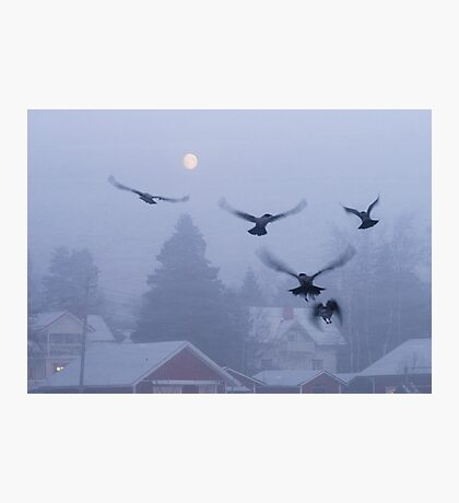 Gathering Crows Photographic Print