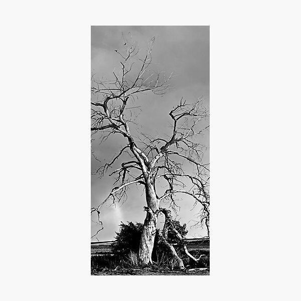 Spirit Tree Photographic Print