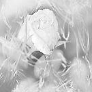 Anjelic by Christina Sauber