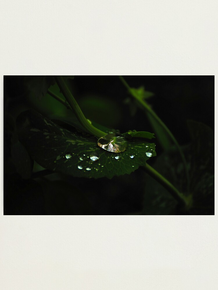 Alternate view of Water and Green Photographic Print