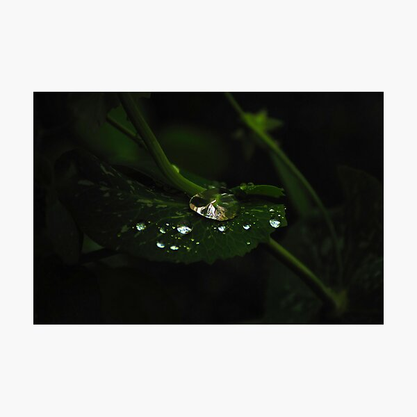 Water and Green Photographic Print