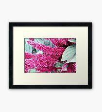 Pink & Grey Framed Print
