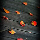 Leaves by KerrieLynnPhoto