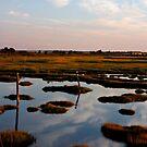 Wetlands by KerrieLynnPhoto