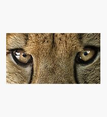 Cheetah Eyes Photographic Print
