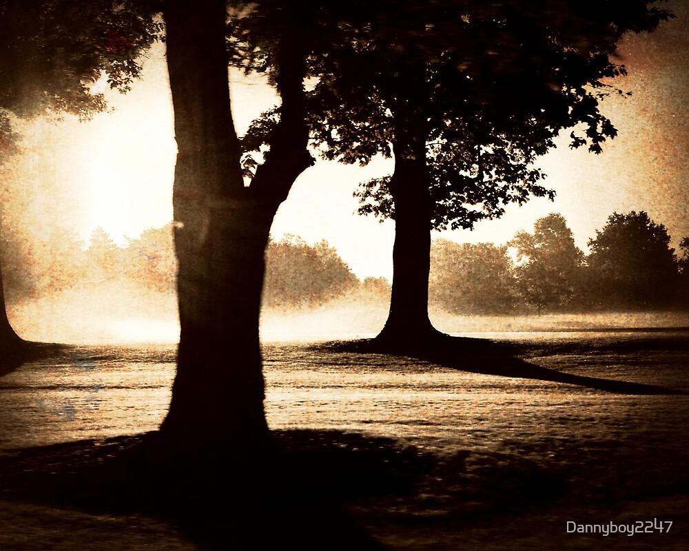 Tree Shadows by Dannyboy2247