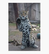 Paws Up! Photographic Print