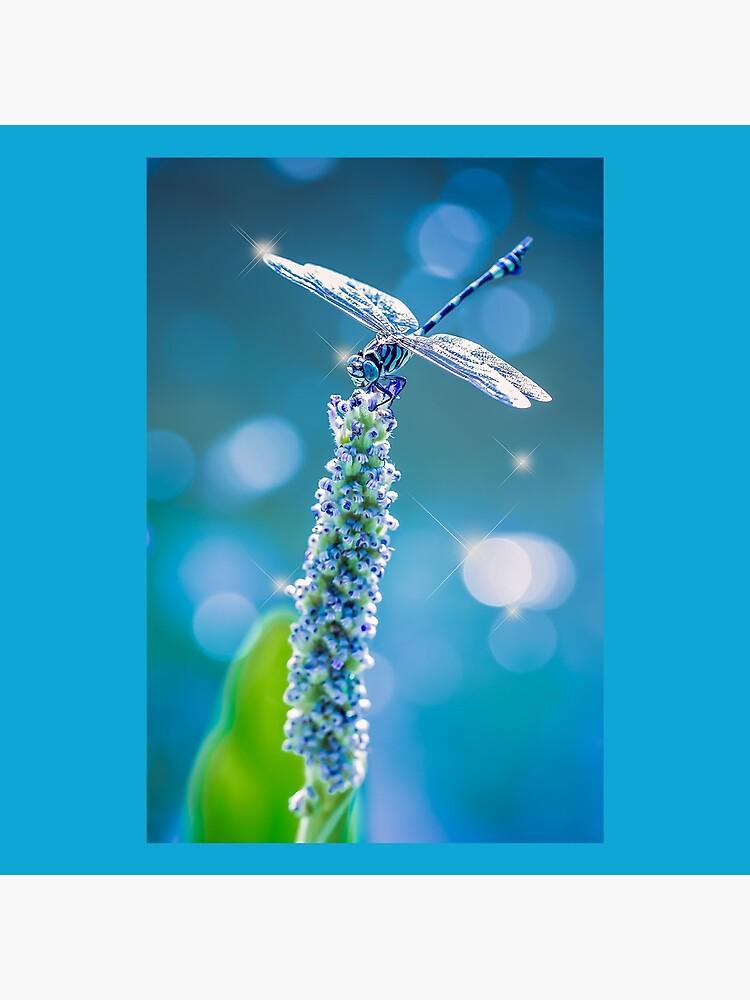 Dragonfly - Mystic Blue by Gailsphotoart