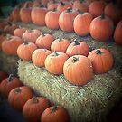 Pumpkins on Display by Judi FitzPatrick