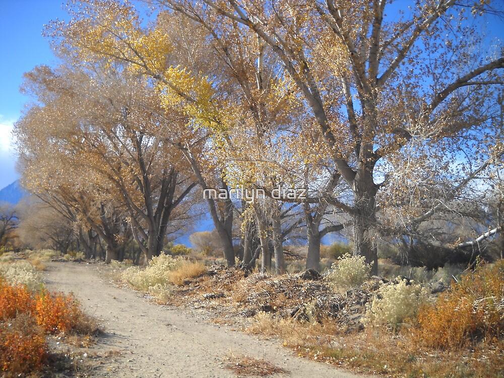Road Home by marilyn diaz