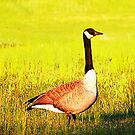 Christmas Goose by Pat Moore