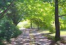 Driveway by Heidi Schwandt Garner