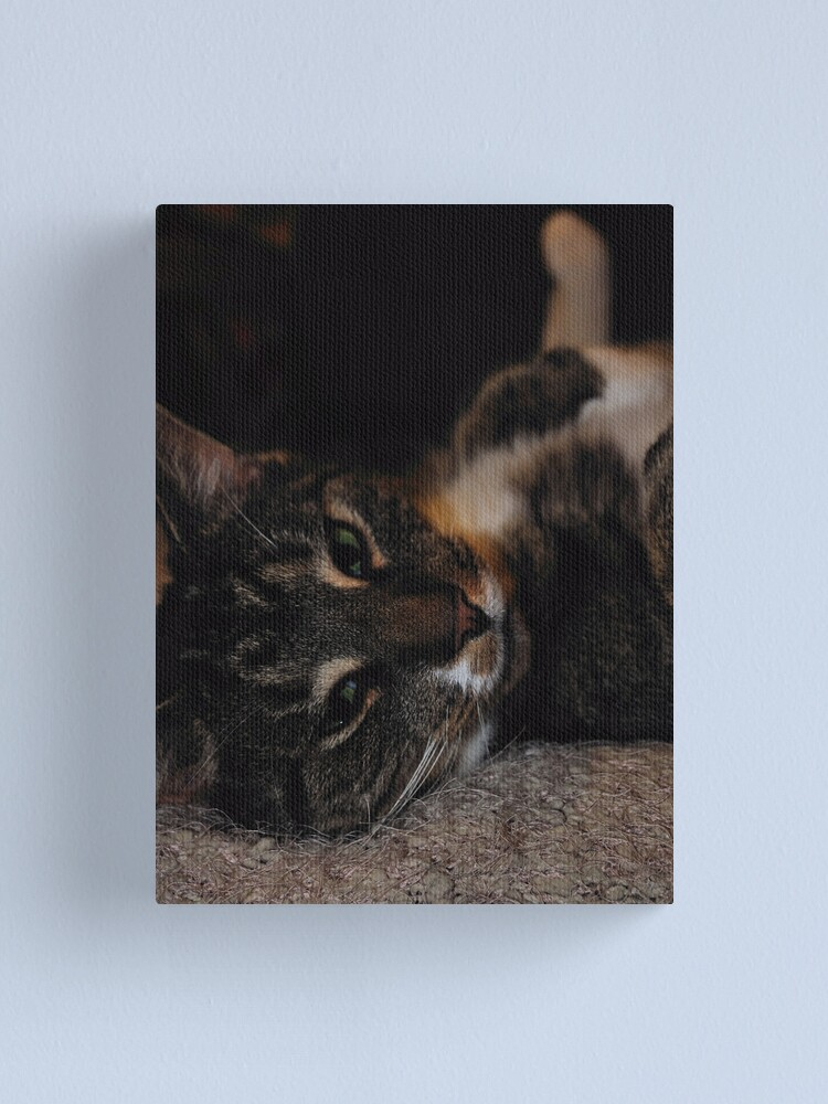 Alternate view of Mr Dribbles Plays Coy Canvas Print