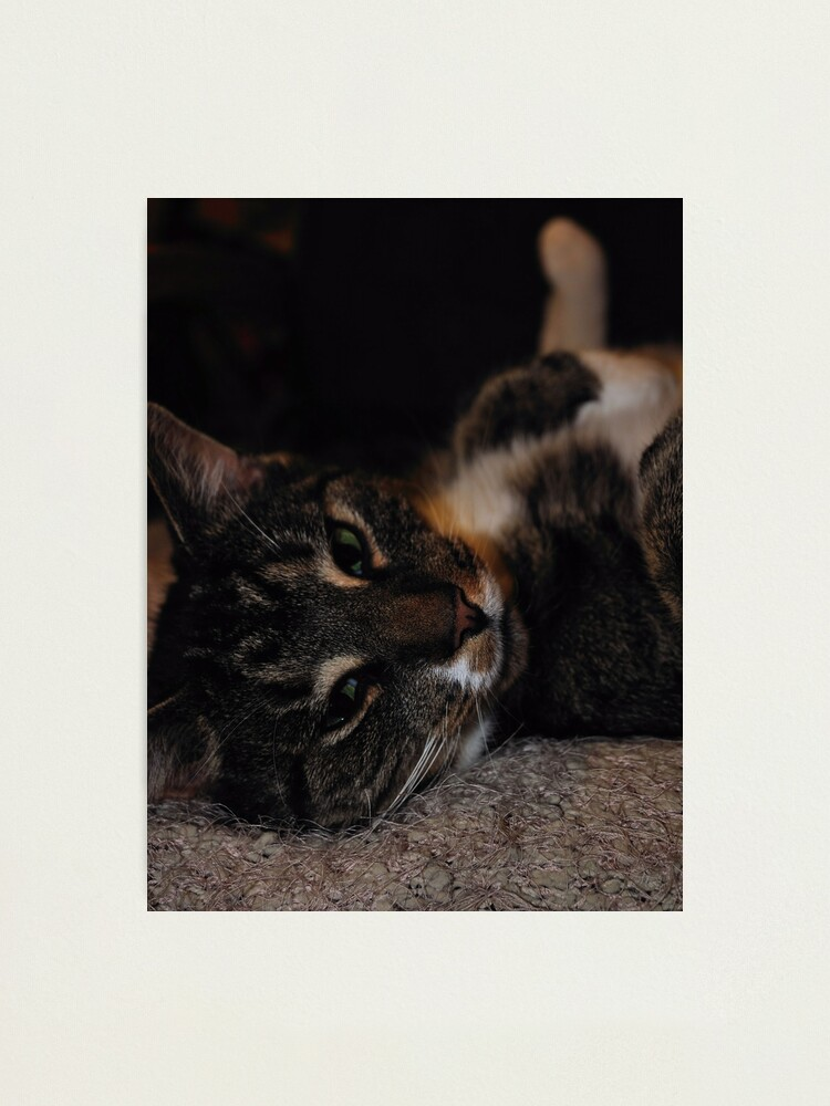 Alternate view of Mr Dribbles Plays Coy Photographic Print