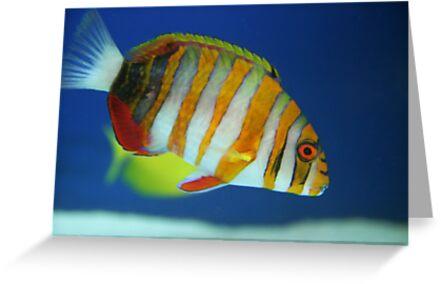 Aquarium Series by ZeeZeeshots