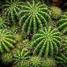 Cacti by Keith G. Hawley