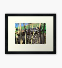 Spider in the Stubble Framed Print