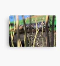 Spider in the Stubble Canvas Print