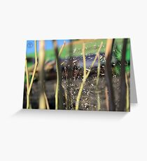Spider in the Stubble Greeting Card