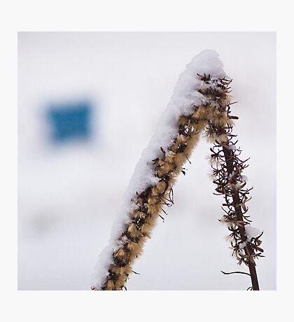 Backyard Abstract Photographic Print