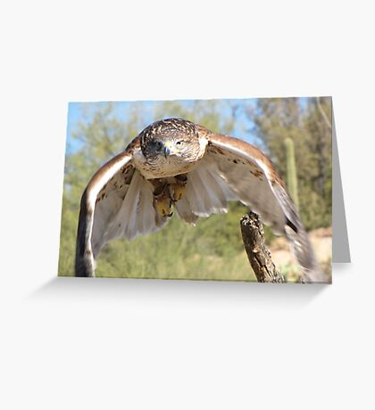 Ferruginous Hawk ~ Spot On! Greeting Card