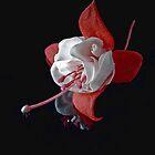Fuchsia by Tom Newman