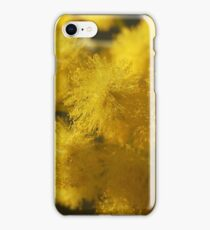 Acacia podalyriifolia - Golden Ball Wattle iPhone Case/Skin