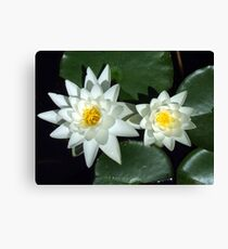 Sirius Flowers Canvas Print
