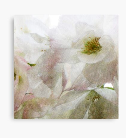 Snow Dreams Collection - Cherryblossom Canvas Print