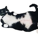 Horizontal Tuxedo Cat on Her Back by mintdawn