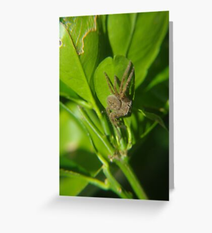 Hiding in the lime tree Greeting Card