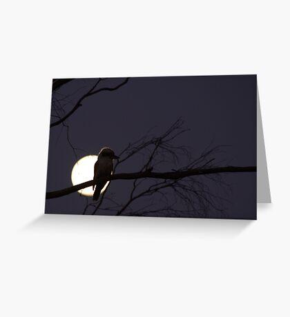 Late Night Kookaburra Greeting Card