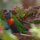 Rainbow Lorikeet by yeuxdechat